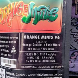 Buy Jungle Boys Orange Mints