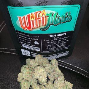 Buy Jungle Boys Wifi Mint